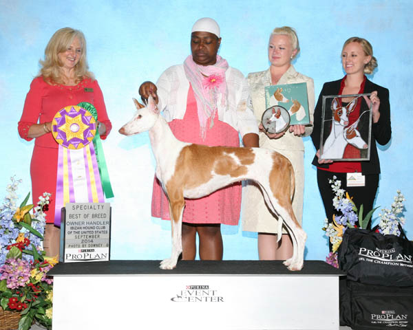Best of Breed & Best Owner-Handled- CH Nahala's Signed Sealed Delivered