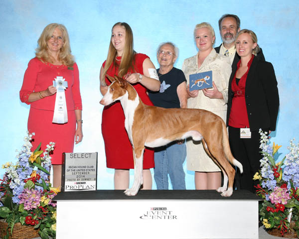 Select - GCH Arbeca's Opus For Danzante SC