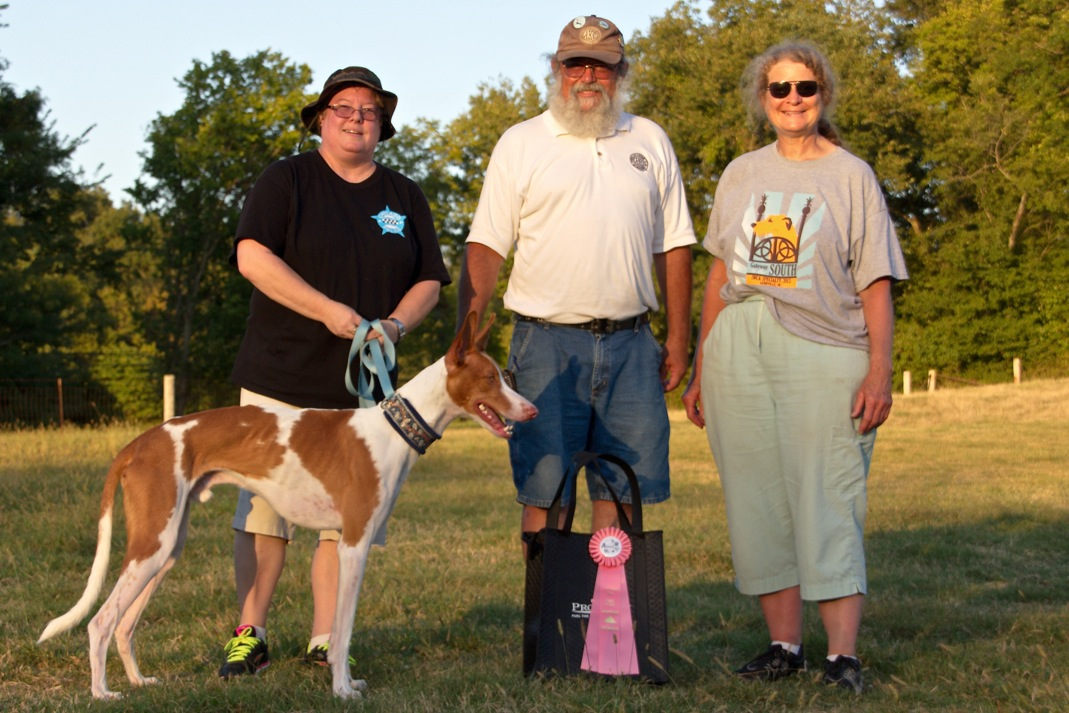 ASFA Lure Coursing First Place Open Stake