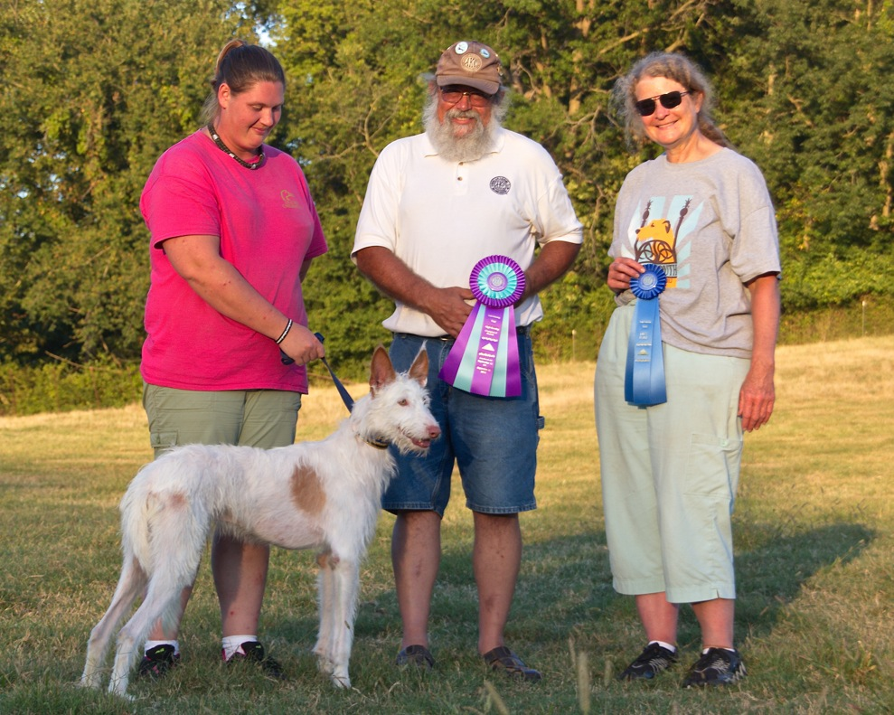 AKC Lure Coursing First Place Open C Stake and High Scoing Bench Stake