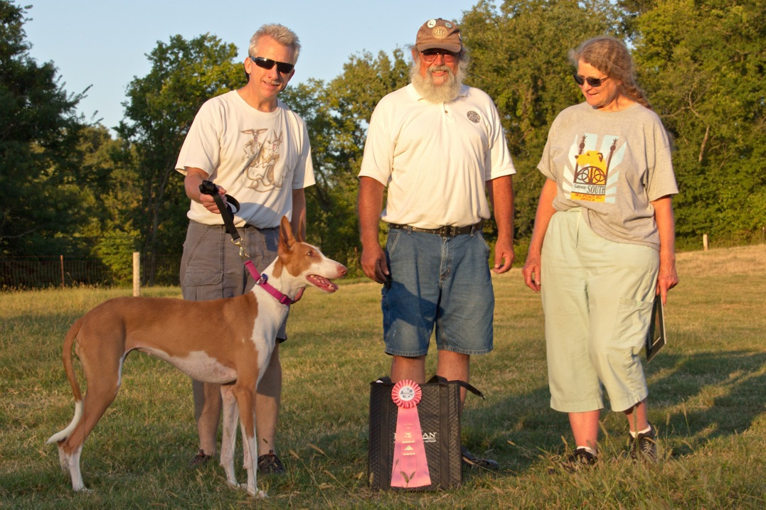 ASFA Lure Coursing High Scoring Singles Stake