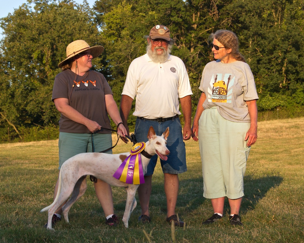 ASFA Lure Coursing Best Of Breed, 1st Place F.CH. Stake & High Scoring Bench Stake