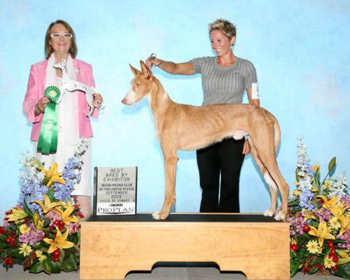 Best Bred by Exhibitor