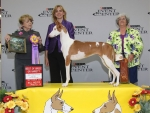 2011 Best of Breed