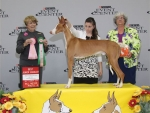 2011 Best Junior Handler