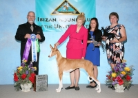 BEST OF WINNERS AND BEST BRED BY EXHIBITOR